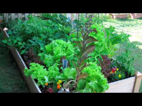 Mel Bartholomew - Introducing Square Foot Gardening